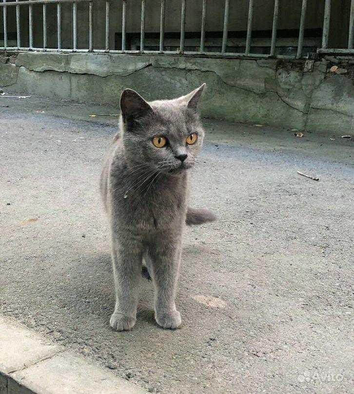 Стерилизованные кошки