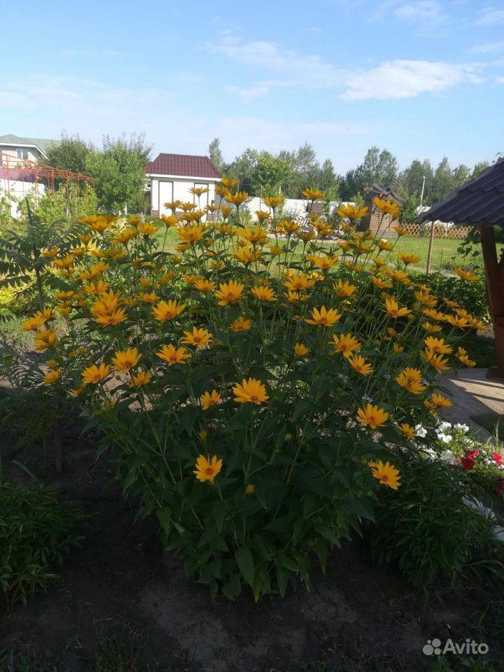 Многолетние растения купить на Зозу.ру - фотография № 6