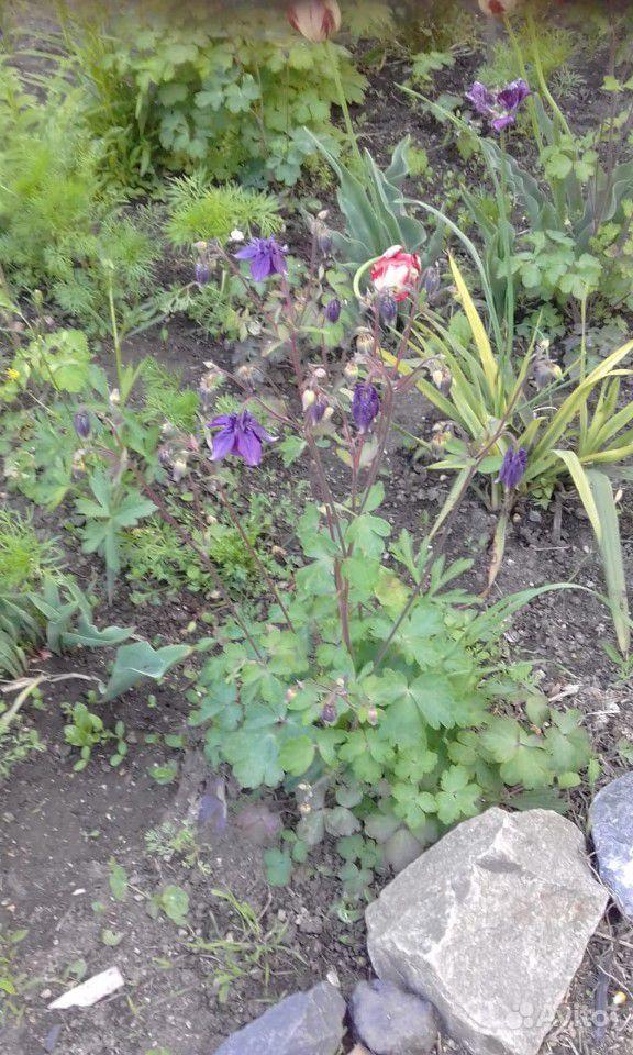 Рассада цветов поделюсь / меняюсь купить на Зозу.ру - фотография № 1