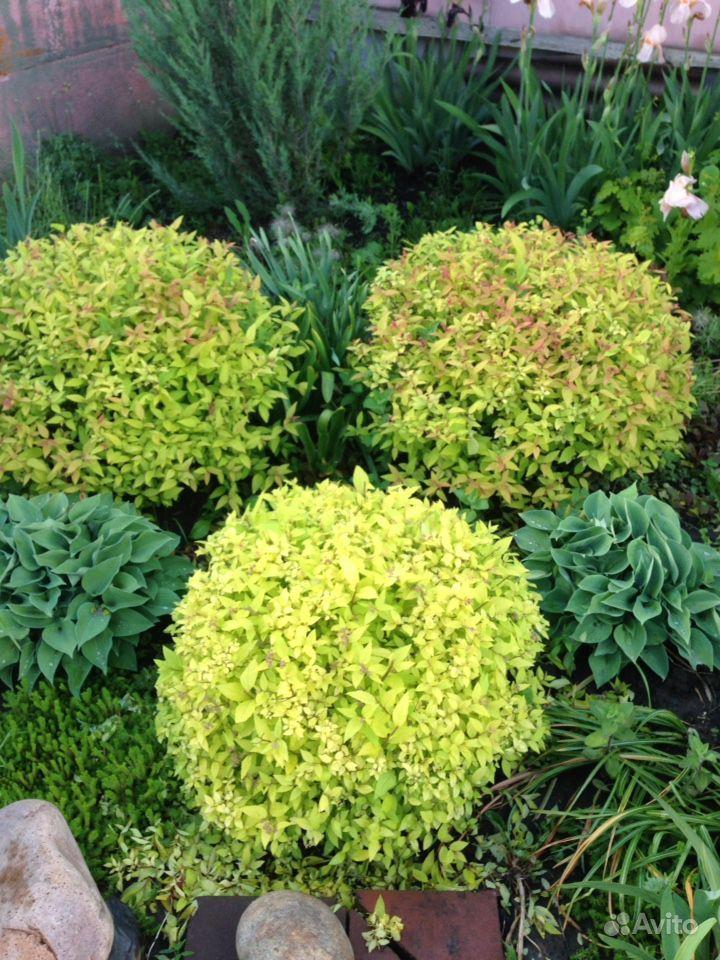 Продам растения купить на Зозу.ру - фотография № 1