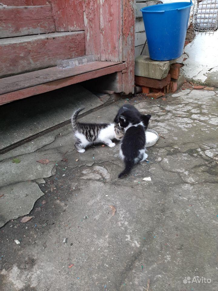 позволит отдам котеночка в добрые руки картинка вот