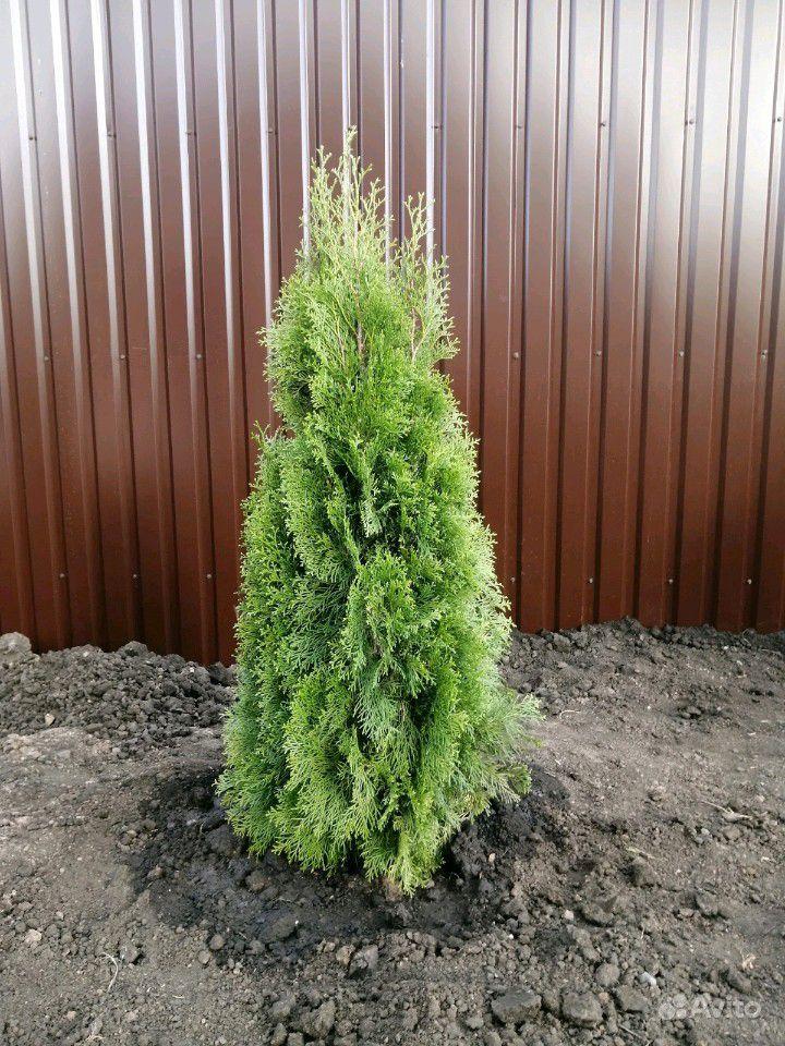 Остаток Растений купить на Зозу.ру - фотография № 1