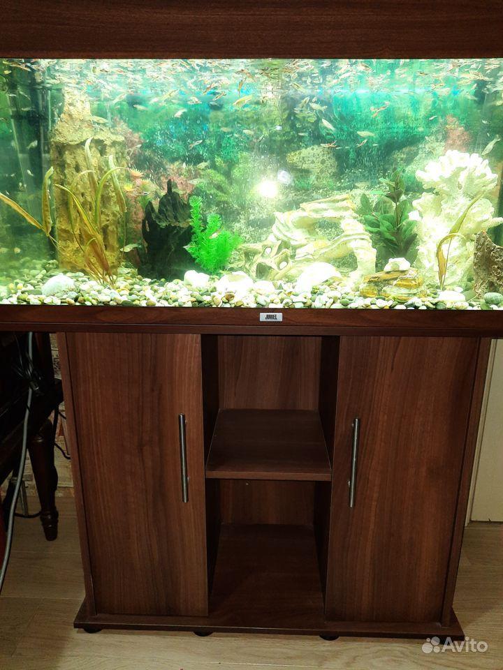 Аквариум juwel 180 литров с рыбками купить на Зозу.ру - фотография № 3