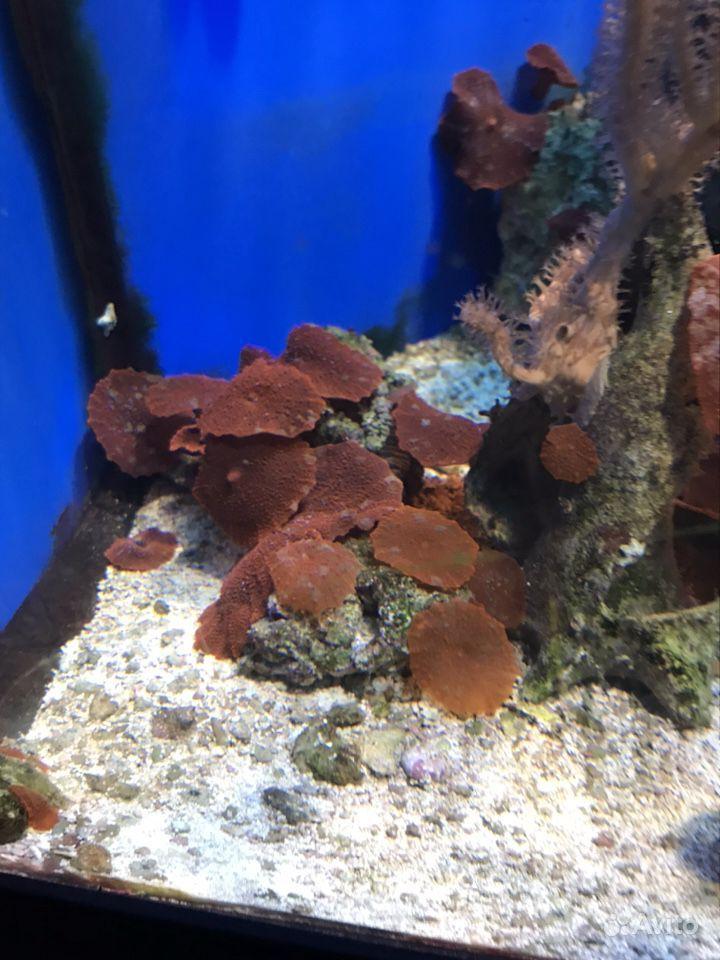 Кораллы купить на Зозу.ру - фотография № 3