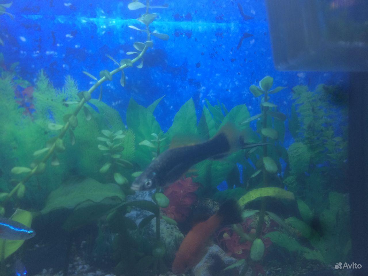 Рыбы купить на Зозу.ру - фотография № 2