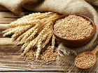 Продам зерно фуражное