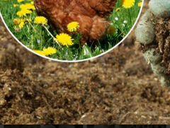 Куриный помет