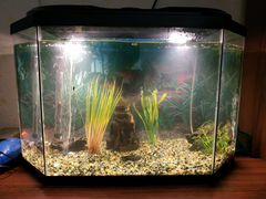 Продам аквариум со всеми принадлежностями