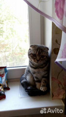 2a6f2276a Вязка с котом - купить, продать или отдать в Волгоградской области ...
