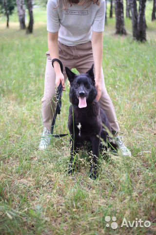Чёрная лисичка Ночь в дар в добрые руки купить на Зозу.ру - фотография № 5