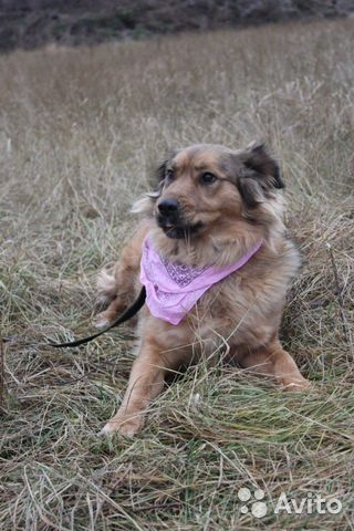 Собака из приюта в дар купить на Зозу.ру - фотография № 7