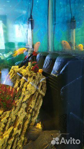 Аквариум с системой и рыбками  купить 6