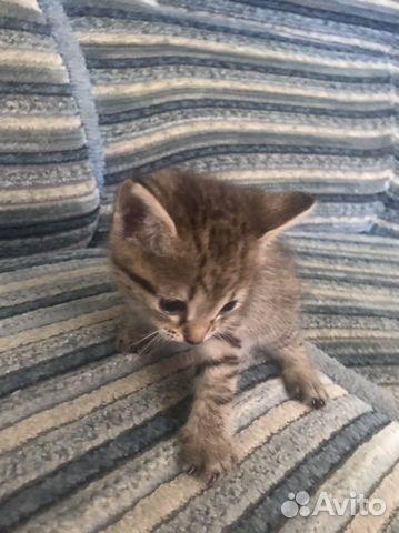 Отдам котят  89609495041 купить 3