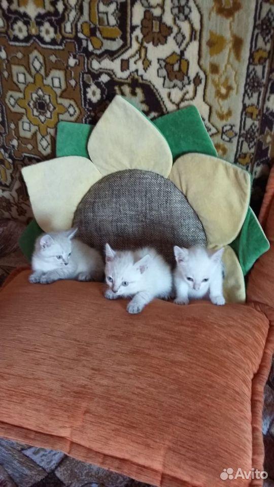 Отдам котенка  89828079717 купить 1