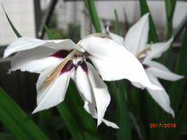 Семена неприхотливых растений с подарком