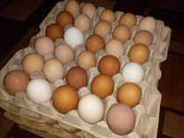 Яйцо куриное домашнее деревенское