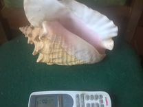 Ракушка для аквариума