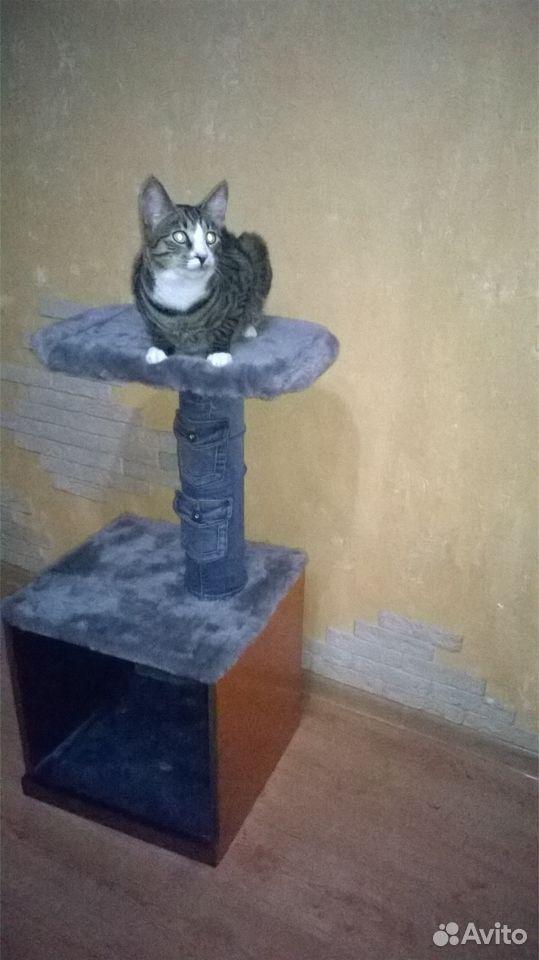 Домик для кота  89005668437 купить 2
