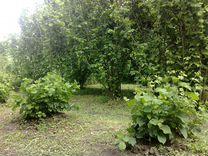 «Саженцы фундука» — Растения в Великовечном