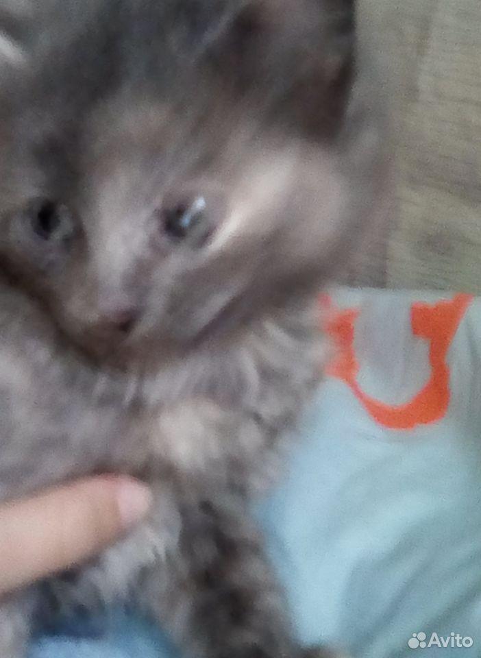 Кошка  89131592463 купить 1