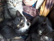 Отдам кошку и 3 котенка