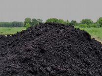 Чернозём — Растения в Саратове