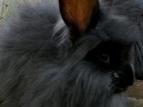 Пуховые кролики, немецкая ангора